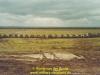 1983-black-balance-krujis-56