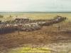1983-black-balance-krujis-57