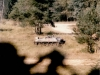 1987-gebirgsartilleriebataillon-81-siller-19