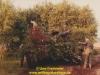 1987-gemischtes-freitmeier-24
