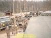 1987-certain-strike-steenbergen-122