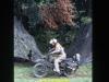 1988-free-lion-klabund-30