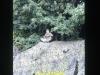 1988-free-lion-klabund-31