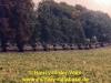 1988-free-lion-van-der-veen-74