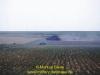 1989-white-rhino-markus-biene-9