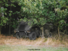 1999-rolling-steel-hehner-38