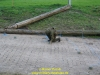 145-2004-rhino-charge-teil5-6-preuc39f
