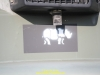 2013-raging-razorback-de-vries-082