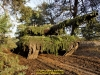 2019-40-jahre-leopard-2-augustdorf-galerie-team-military-database-bild-007