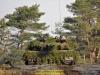 2019-40-jahre-leopard-2-augustdorf-galerie-team-military-database-bild-011