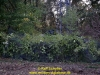 2019-celtic-storm-schober-050