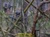 2019-schc3bcbz-44-pantserinfanteriebataljon-galerie-hanke-bild-024