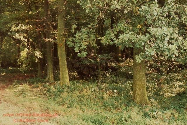 1984-lionheart-andrew-dace-004