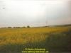 manc3b6ver-uk-und-us-army-vogelsbergkreis-galerie-julenburg-23